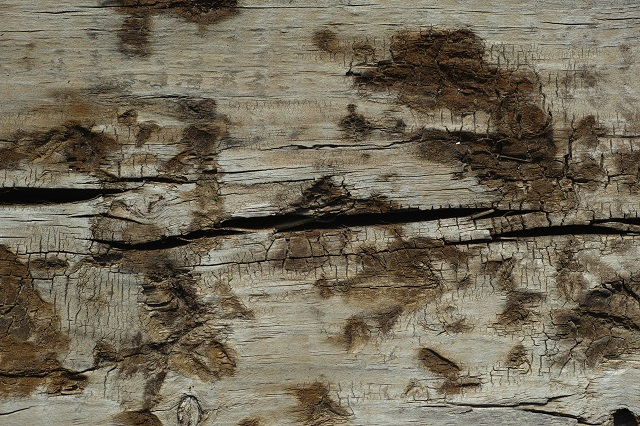Mold Stains on Wood