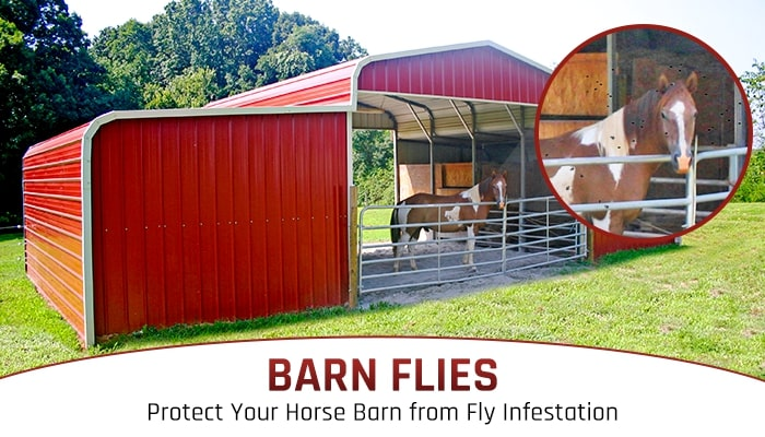 Barn Flies: Protect Your Horse Barn from Fly Infestation