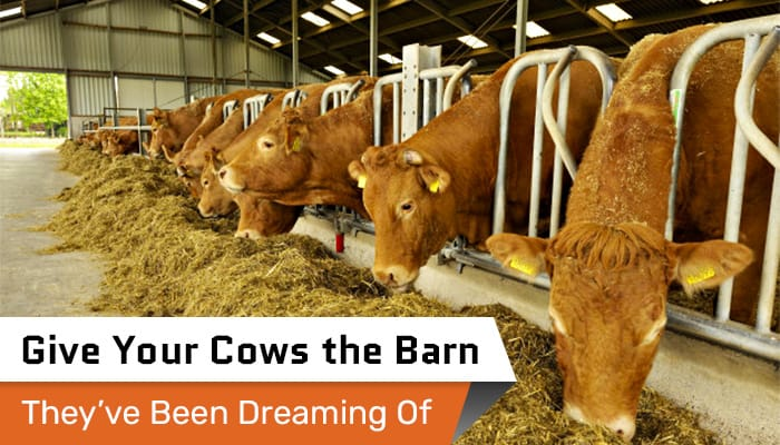 Give Your Cows the Barn They've Been Dreaming Of