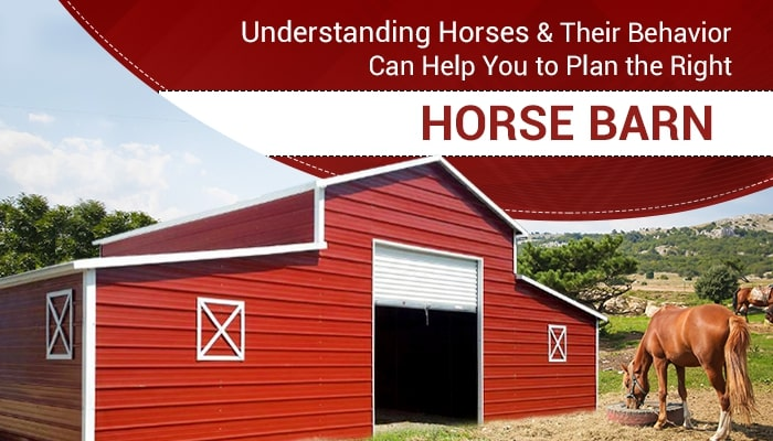 Understanding Horses & Their Behavior Can Help You to Plan the Right Horse Barn