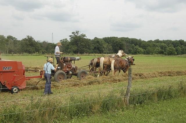 American Farming